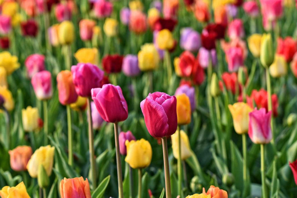flowers, plants, garden